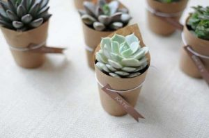 cactus de regalo
