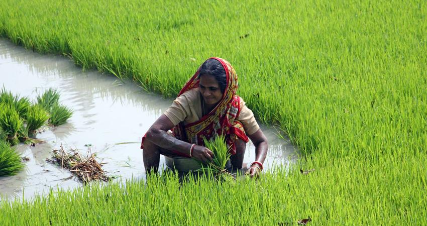 mujer agricultora cultivando campos en la India