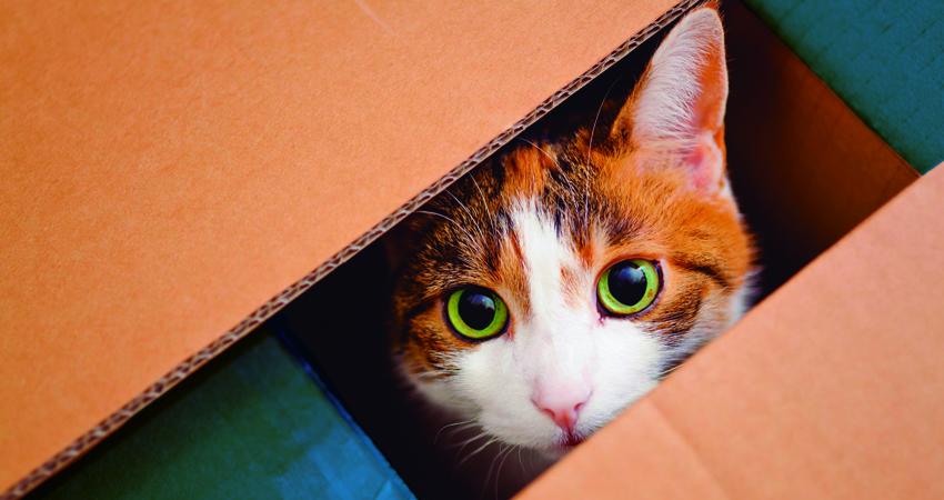 Gatito asomándose en una caja de cartón