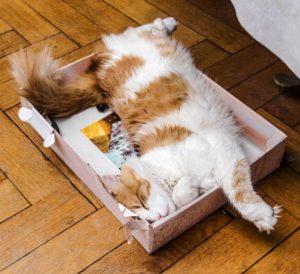 Gato tumbado en una caja de cartón