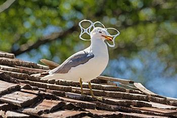 Gaviota afectada por la contaminación por plásticos en el mar