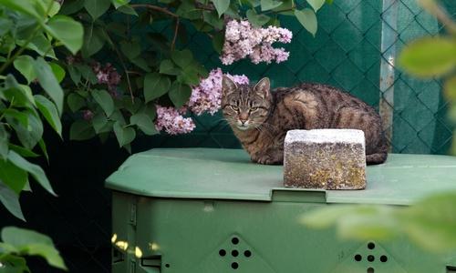 Gato sobre una compostadora doméstica